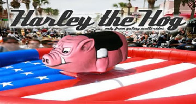 *** NEW *** Harley the Mechanical Hog